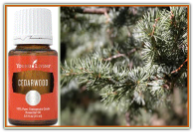 Cedarwood - 15ml